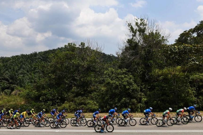 Cyclists ride past palm oil trees during the third stage of the Malaysian Le Tour de Langkawi cycling race from Muar to Putrajaya in Muar on April 8, 2019.