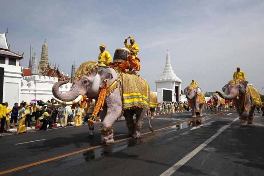 The animals and their handlers from the ancient capital of Ayutthaya walked for a short stretch before paying their respects to a portrait of the king.