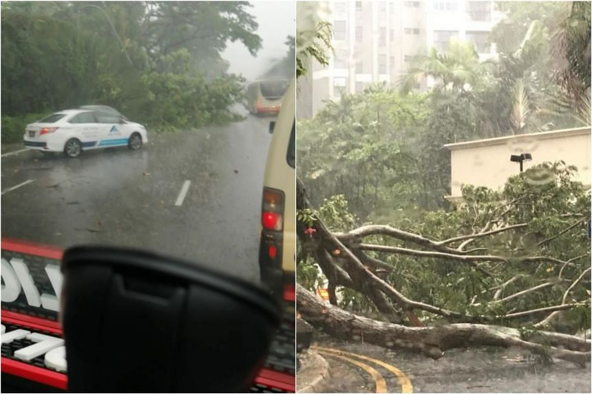 A tree fell on the Pan-Island Expressway (left), and a large tree branch fell at Bayshore Park condominium during the heavy rain on May 8, 2019.