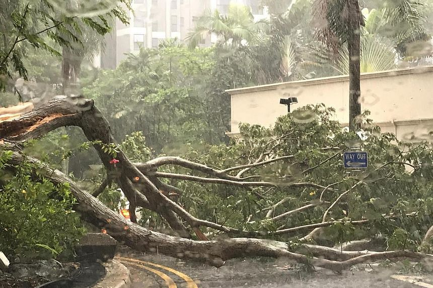 Several trees, such as this one at Bayshore Park condominium, fell yesterday, as a result of heavy rain and strong winds. A fallen tree on the Pan-Island Expressway caused a traffic jam that lasted more than an hour.
