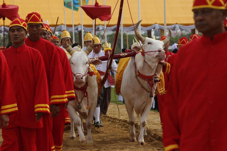 The colourful procession, led by two Hindu Brahmin priests, saw two white oxen walk a field to the sound of blaring trumpets.