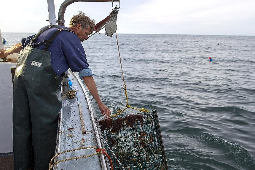 Maine's lobster industry, which employs well over 15,000 people and is worth around US$1 billion (S$1.36 billion) a year, has been hit hard by retaliatory tariffs from China in the trade war between Washington and Beijing.