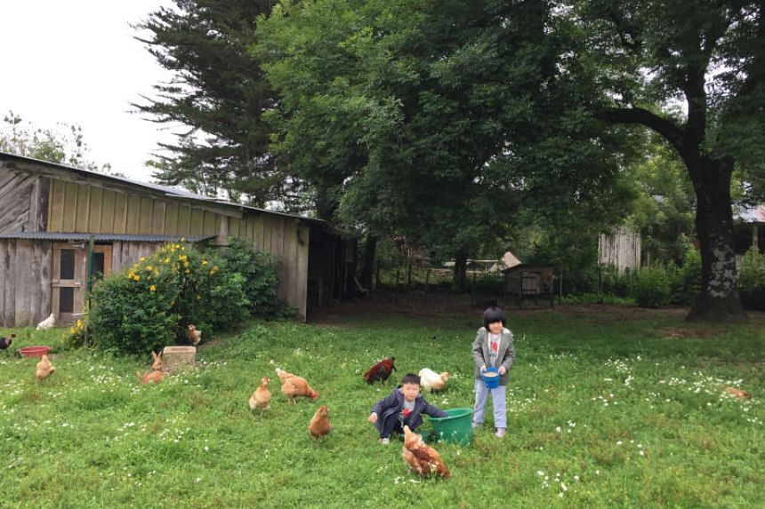 Feeding the free-range chickens every morning was the most fun part of the day for the kids.