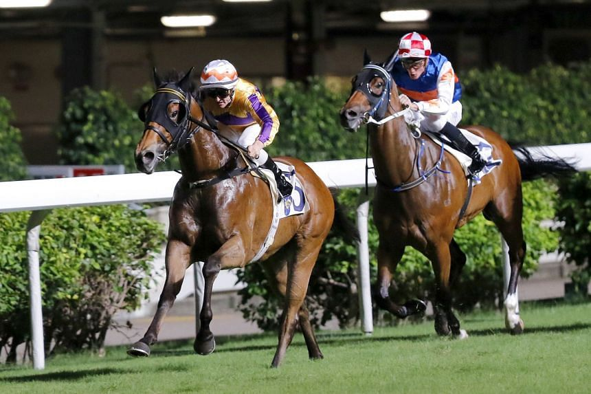 Saul's Special (left), a three-time winner over the 1,000m, should return to the winning list with champion jockey Zac Purton back in the saddle in Race 9 at Sha Tin today.