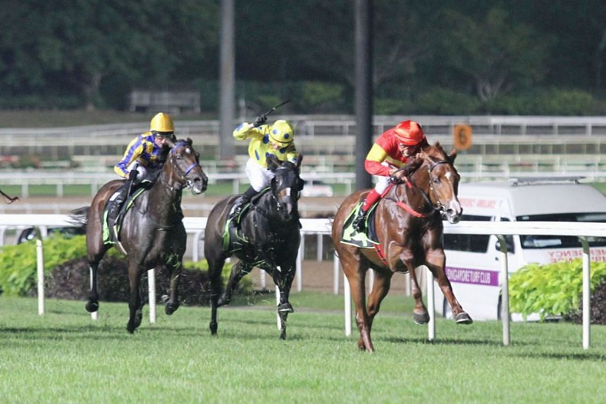 No Regrets (in red) springing a $103 surprise in Race 2 at Kranji last night and providing trainer Shane Baertschiger the middle leg of his three-fromthree treble.