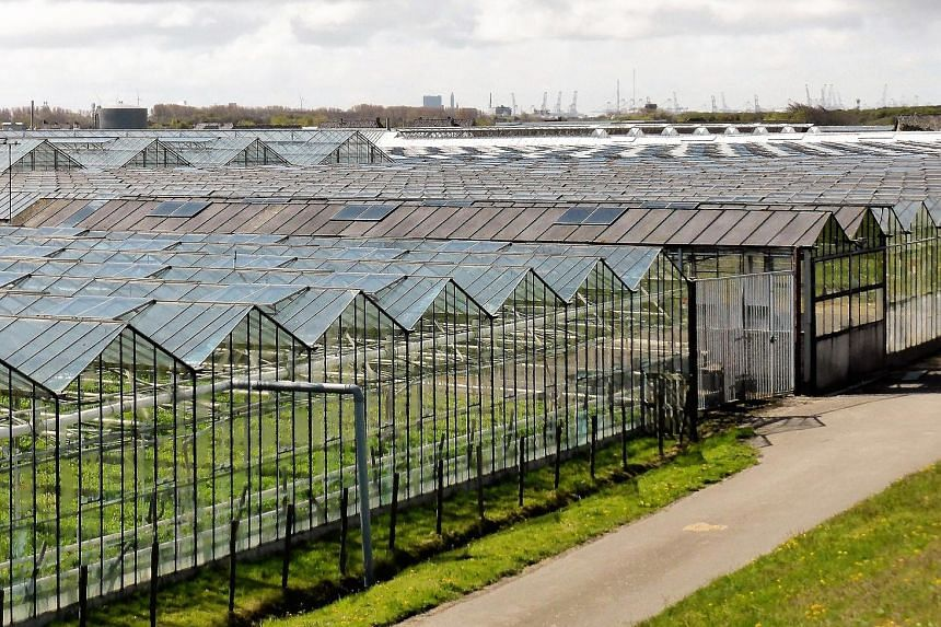 Rows of greenhouses in the Netherlands, which is the world's second biggest food exporter, after the US which is 270 times larger.