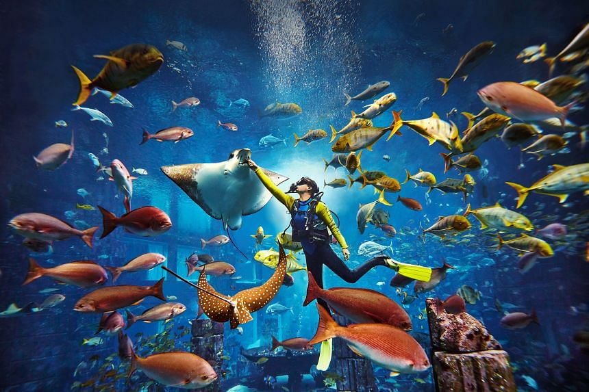 Dubai's largest aquarium is home to more than 65,000 marine animals including sharks and stingrays spread out over 21 exhibits. PHOTO: TOURISM DUBAI