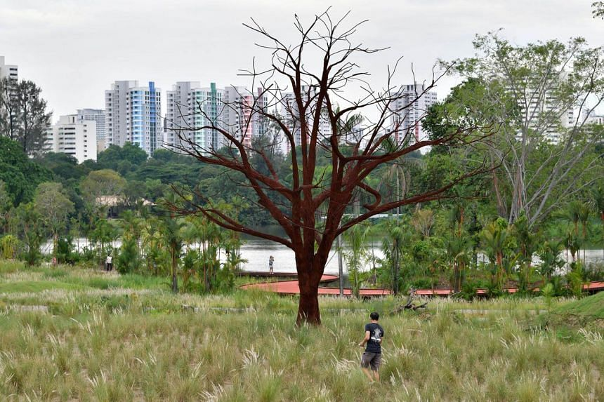 A man cuts through the lalangs to reach a lone tree at the grasslands in Jurong Lake Gardens.