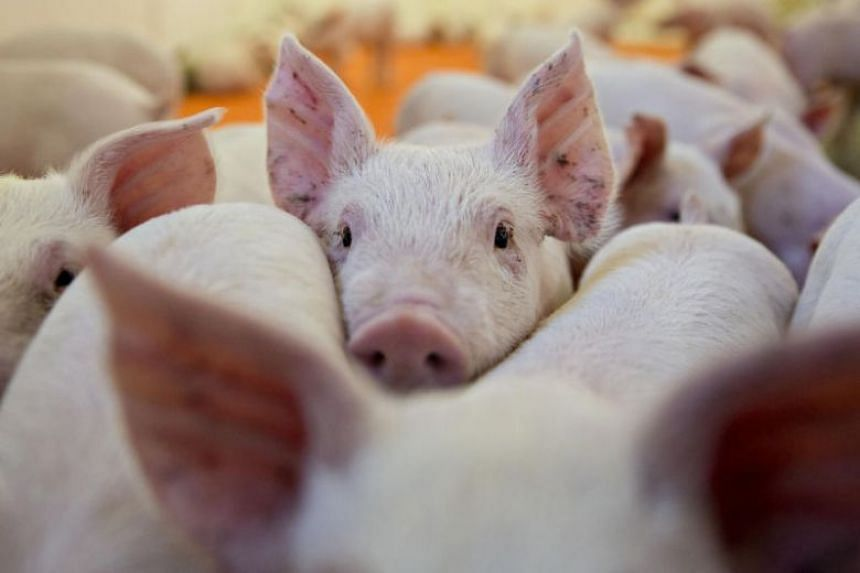 Prior to the trade war, China and Hong Kong combined were the second largest export market for US pork.