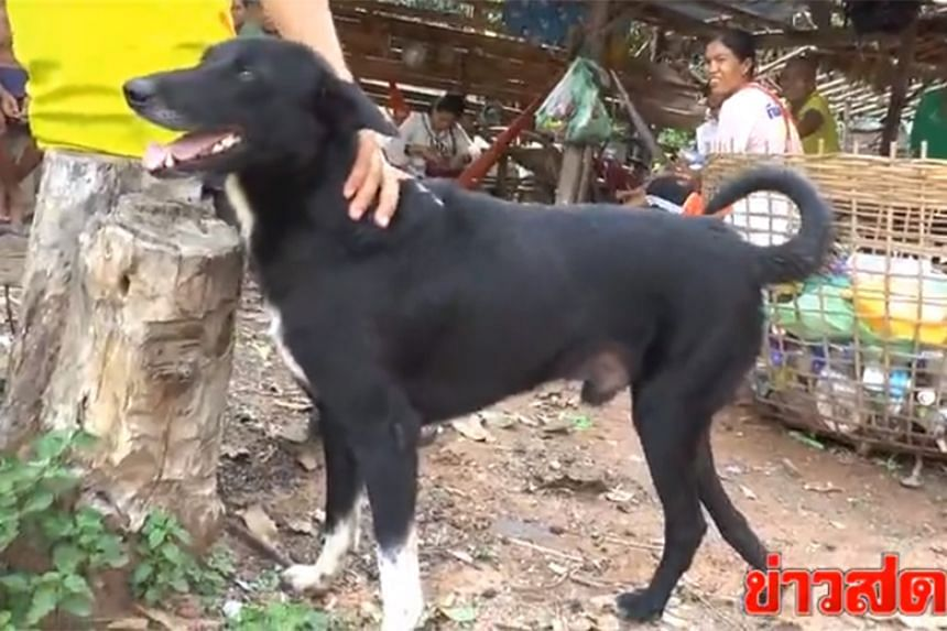 Ping Pong the black mutt, which has only three working legs, discovered the baby in a cassava plantation in Ban Nong Kham village in the Thai province of Nakhon Ratchasima and started digging.