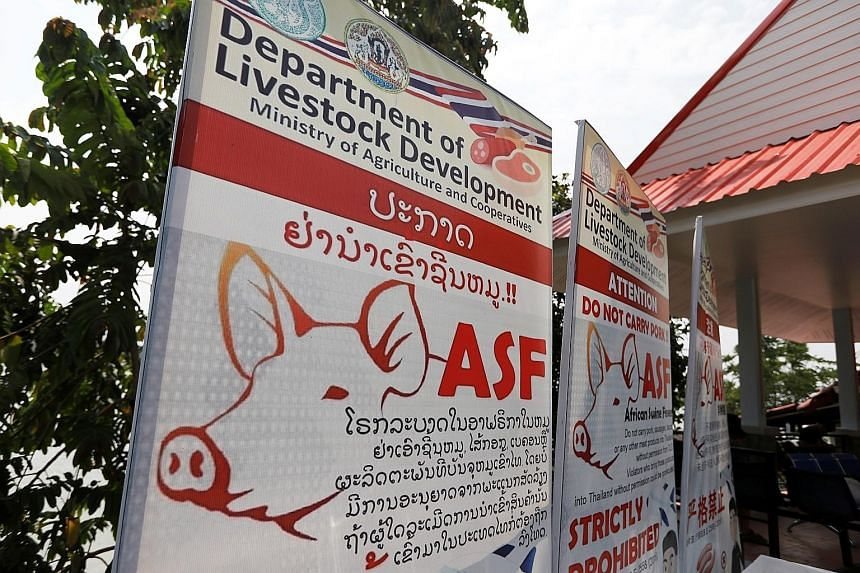 Public health banners raising the alert over African swine fever are seen in Chiang Rai, on the Thai side of the Golden Triangle where Thailand, Myanmar and Laos meet. Thailand has tightened inspections at airports and border checkpoints to hold off