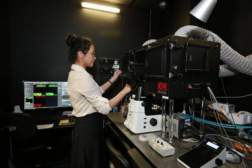 Dr Peng Qiwen, lab executive at the Mechanobiology Institute at the National University of Singapore, operates a microscope.