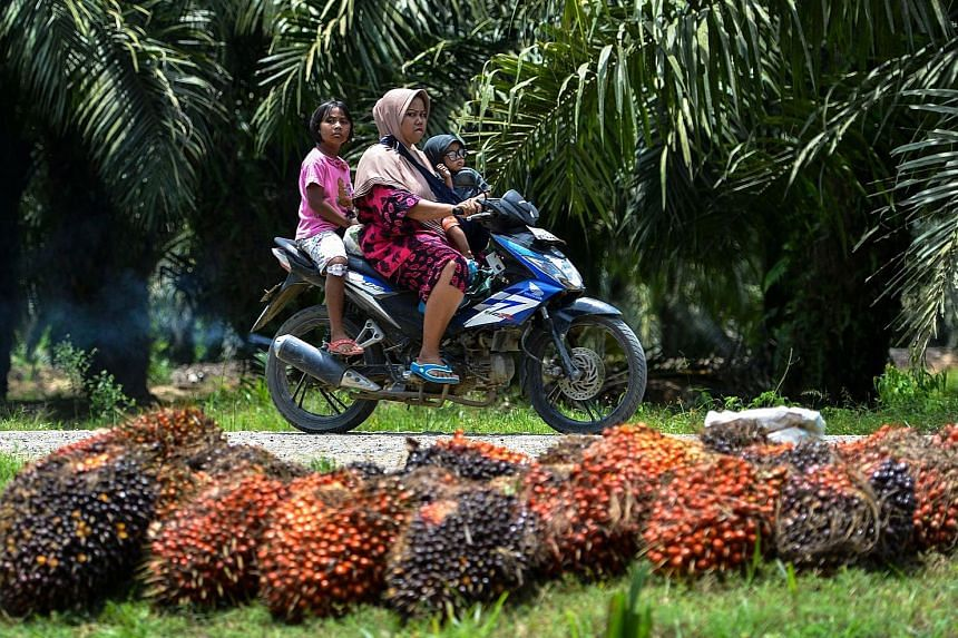 Villagers passing through an oil palm plantation in Indonesia's Aceh province. Palm oil producers are among South-east Asia's biggest employers. Around 16 million Indonesians owe their jobs to the commodity, which is used for cooking, in cosmetics an