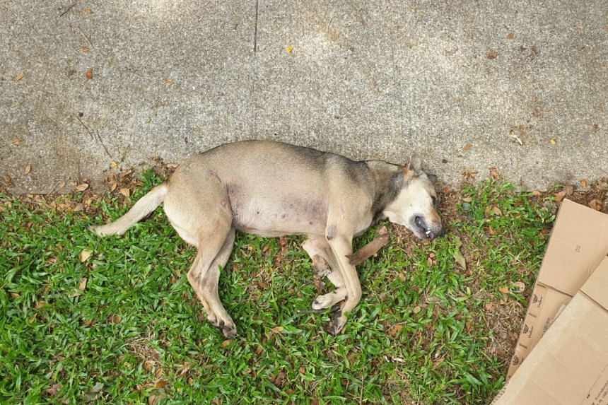 A friend of the dog's owner said that a passer-by found the dog injured by the roadside on May 12, 2019.