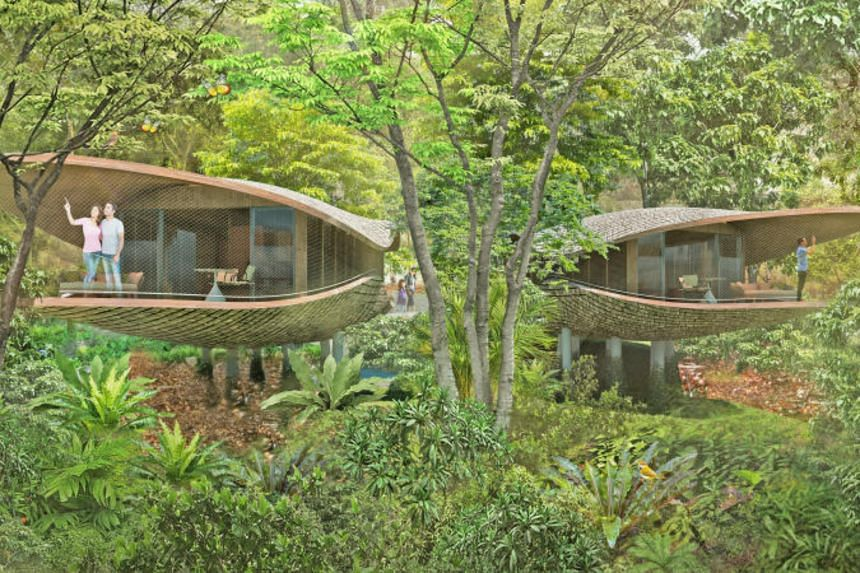 Treehouses at the yet-to-be-named resort, which will sit on 4.6ha on the north-east end of the Mandai precinct.