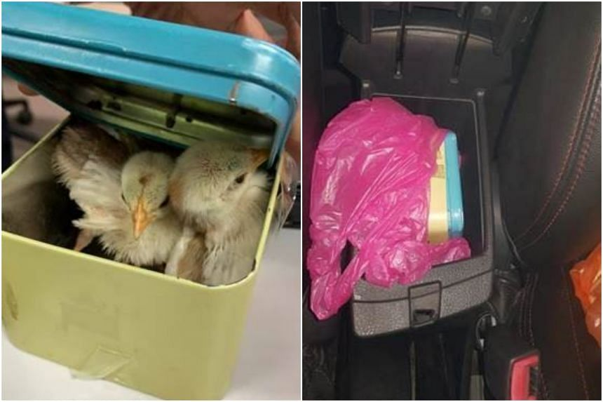 An Immigration and Checkpoints Authority officer found two live chicks hidden in a watch box, which was kept in one of the car's compartments.