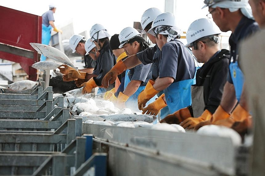 Japanese giant Meiho Fishery says it observes a sustainable catch limit, and tries to avoid catching fish that have not grown to full size.