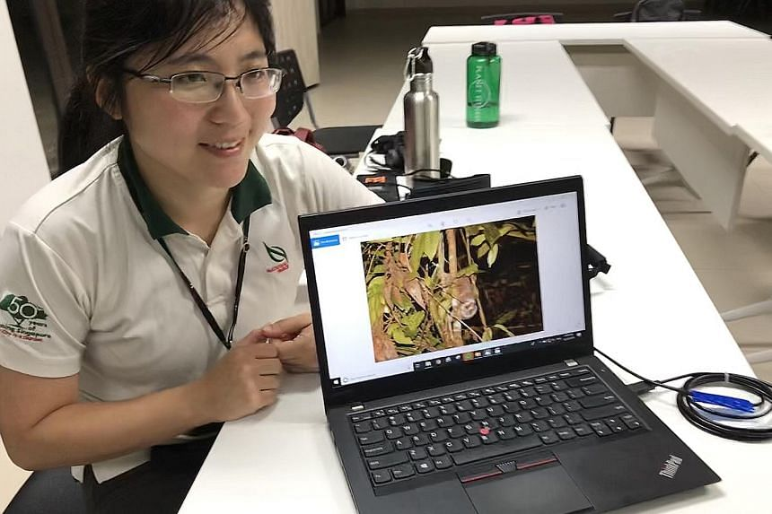 Ms Li Tianjiao (above), a manager at NParks' National Biodiversity Centre, showing pictures of animals taken during a night survey. Thermal imaging goggles are among the new tools NParks is using to capture images of creatures like the Sunda slow lor