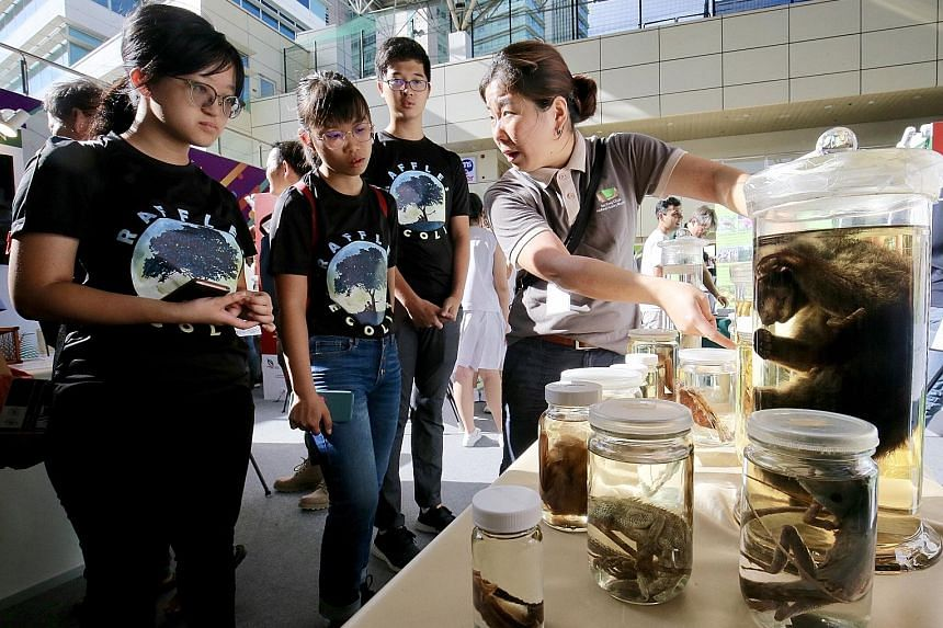 Above: This six-eyed spider, a new species, is named after the reserve - Paculla bukittimahensis. Left: The Festival of Biodiversity was opened in Toa Payoh Hub yesterday. PHOTOS: JAMES W. B. KOH, LIANHE ZAOBAO
