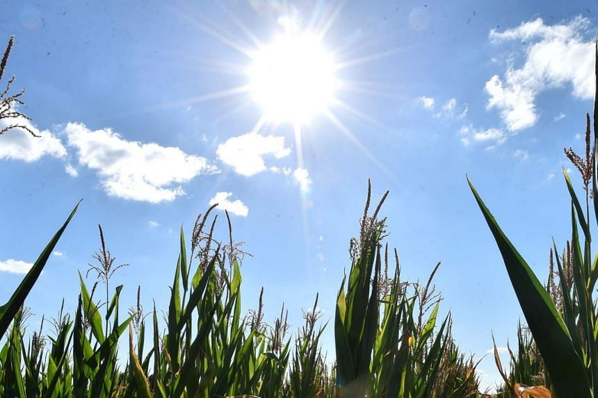 Temperatures have never before topped 38 deg C in Hokkaido, the Japan Meteorological Agency said.
