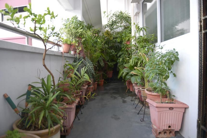 """""""The plants have been like this for the past eight to nine years,"""" said a neighbour who lives in a maisonette below the unit."""