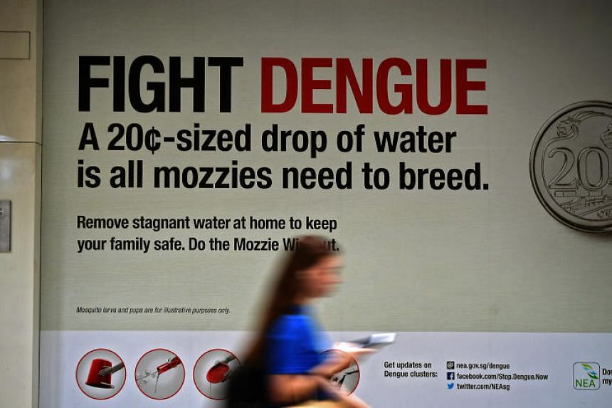 About 4,100 people have become sick with dengue so far in 2019 - more than for the whole of 2018.