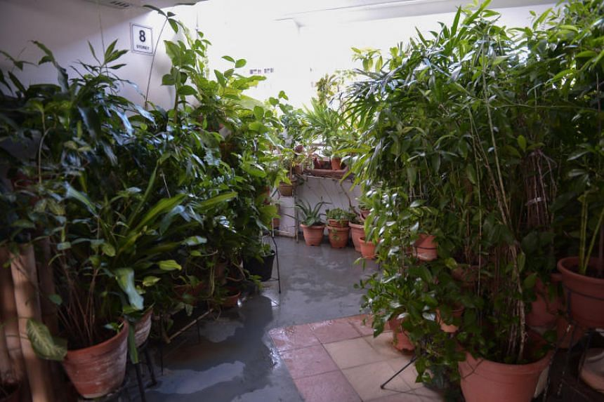 The Straits Times saw about 40 tall potted plants lining the walkway on Monday (May 27).