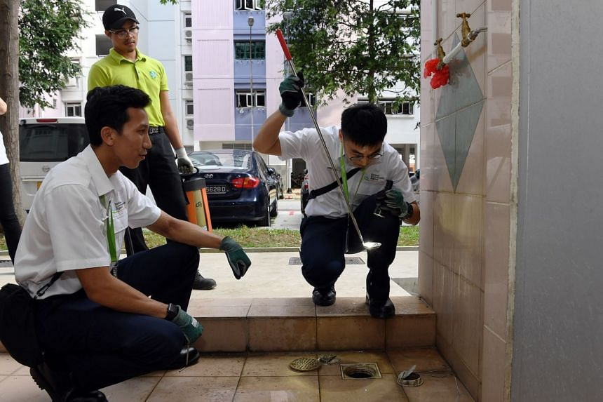 National Environment Agency officers checking drains for signs of mosquito breeding. The two biggest dengue clusters are both around Woodlands Avenue 6, where a total of 262 people have been diagnosed with the disease caused by the Aedes aegypti mosq