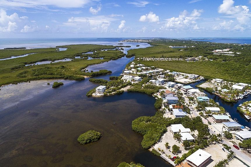 The John Pennekamp Coral Reef State Park. Florida has historically lost much of its mangroves, but they are well protected now.