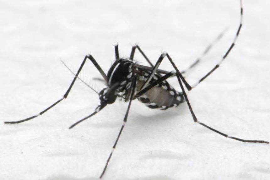 The Aedes albopictus mosquito is more likely to spread chikungunya. It prefers to breed in forests and places with high vegetation.