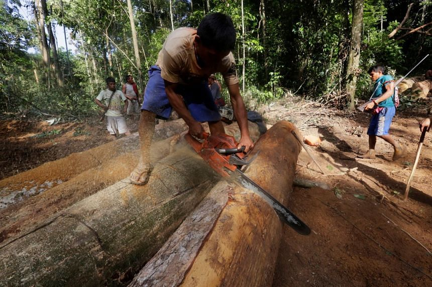 A Ka'apor Indian warrior uses a chainsaw to ruin a log found during a jungle expedition to search for and expel loggers from the Alto Turiacu Indian territory in the Amazon basin in a 2014 file photo.