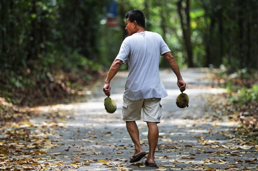 Ubin residents like Mr Heng Buck Lim, 64, are concerned that people from mainland are coming to the island to take their durians from their trees, some of them to sell.