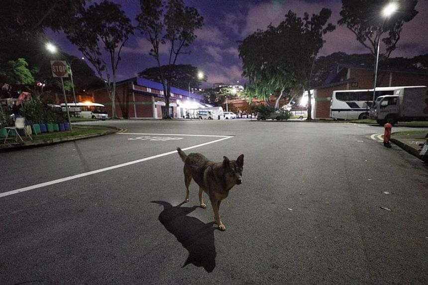 A dog roaming the road at night near some funeral parlours in Geylang Bahru Terrace. An ST reader had complained last month of dogs entering a parlour where his mother's body was being prepared for her funeral.