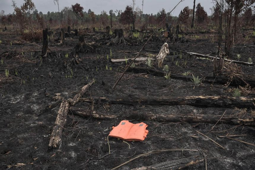 A discarded life jacket lies amongst a burnt plantation in Bengkalis regency in Riau in the aftermath of a forest fire.