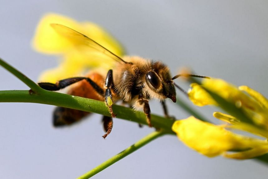Local officials put out warnings amid concerns for people with bee allergies.