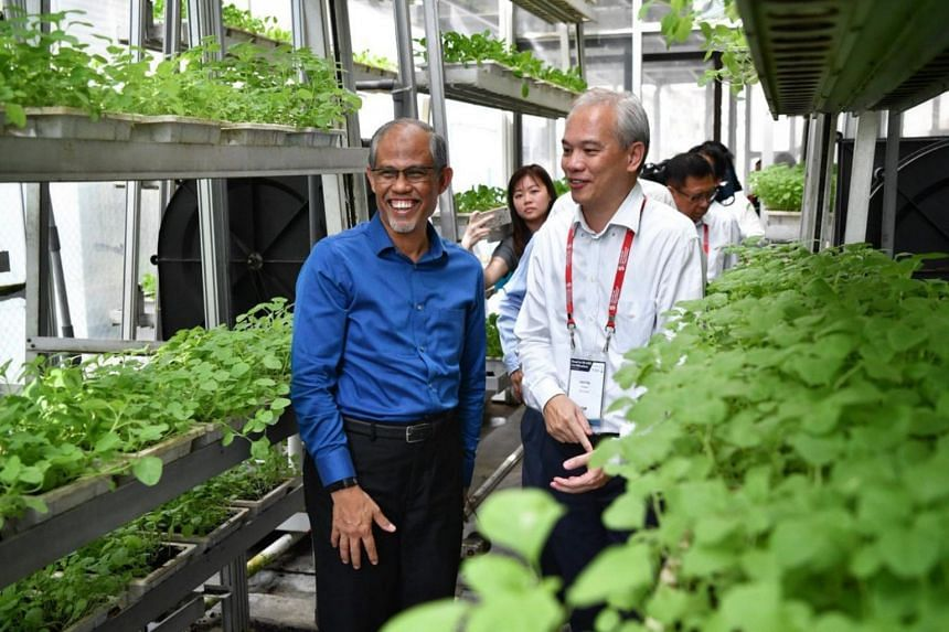 Mr Jack Ng (right), founder of Sky Greens, showing Mr Masagos Zulkifli, Minister for the Environment and Water Resources, around the vertical farm facility.