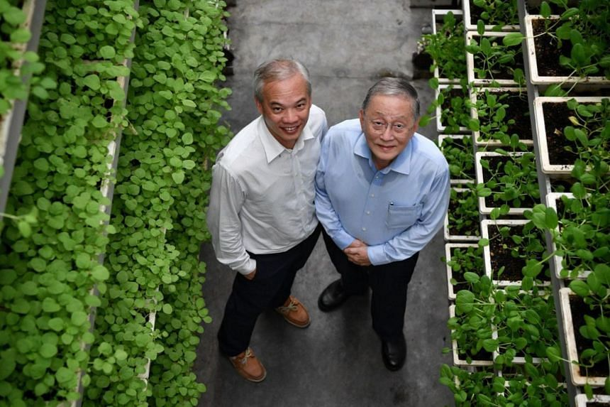(From left) Jack Ng, founder of Sky Greens and Dr Ngiam Tong Tau, chairman of Sky Greens in the Vertical Farm facility.