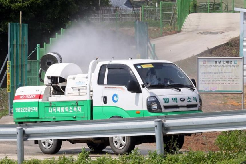 In the wake of the North's outbreak, South Korea has stepped up disinfection measures near the shared border to keep the viral disease from spreading to the South.
