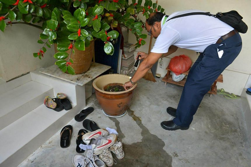 A National Environment Agency officer checking potted plants at Block 106 Hougang Avenue 3 for signs of mosquito breeding.