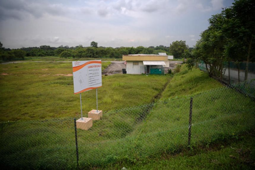 Land set aside for beansprouts farming at 28A to 28F Sungei Tengah Road, pictured on June 19, 2019.