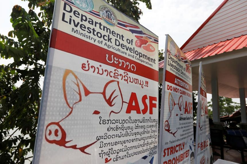 Public health banners alerting the public about swine fever is seen in Chiang Rai, Thailand, on May 16, 2019. Chiang Rai lies on the Thai side of the Golden Triangle, a triple border between Thailand, Myanmar and Laos separated by the Mekong river.