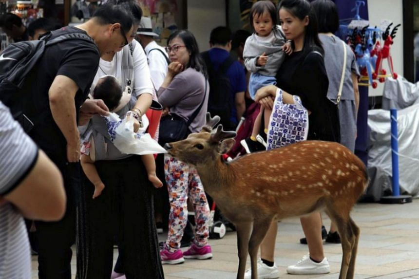 After people repeatedly fed them with snacks from plastic bags, deer in the park have developed the behavior of snatching plastic bags, apparently expecting to find food inside.