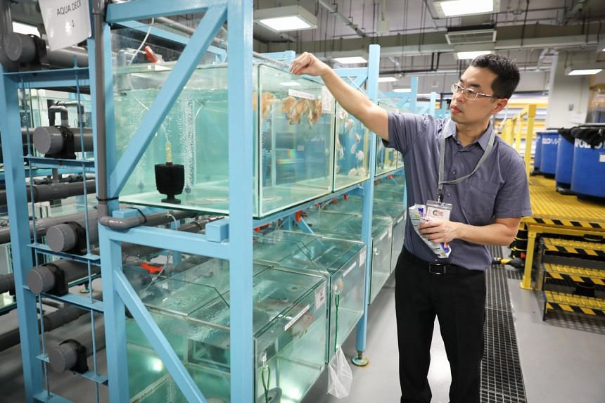The Aquaculture Innovation Centre is the first to run as a consortium so that various players from academia and industries can do joint research to strengthen the aquaculture sector.