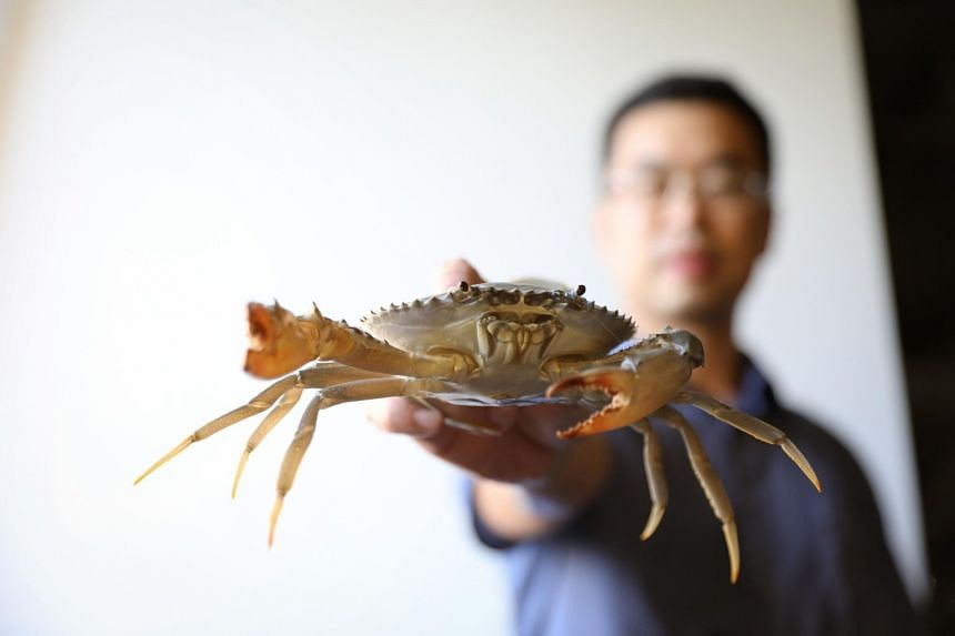 Due to over-harvesting and bad weather conditions brought by global warming, the mud crab populations in the Philippines, Indonesia, Sri Lanka and Malaysia have dwindled by 30 per cent.