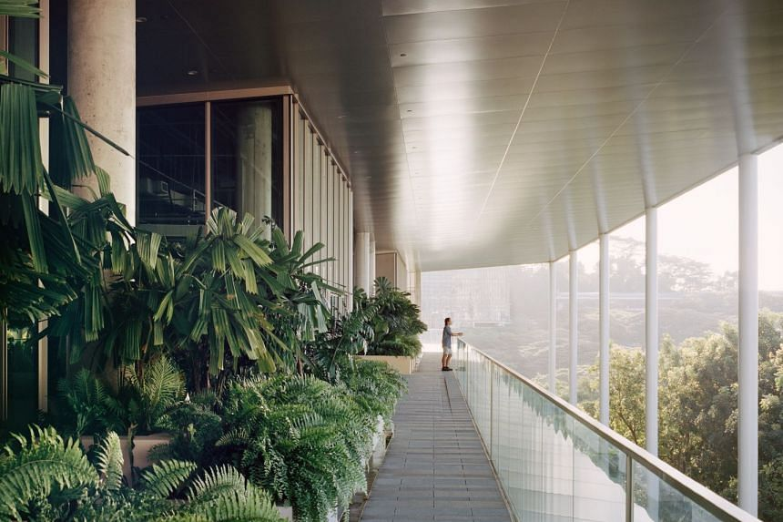 SDE4 integrates gardens and learning spaces by incorporating greenery into its design. The building encourages its occupants to step out of the indoors for a breath of fresh air. PHOTO: RORY GARDINER