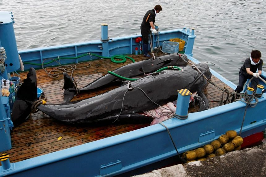 Japan resumes commercial whaling