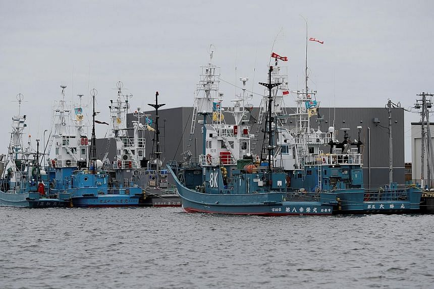 Ships preparing to set sail today from Kushiro port in Hokkaido as Japan resumes commercial whaling for the first time in more than 30 years. The country withdrew from the International Whaling Commission last year.