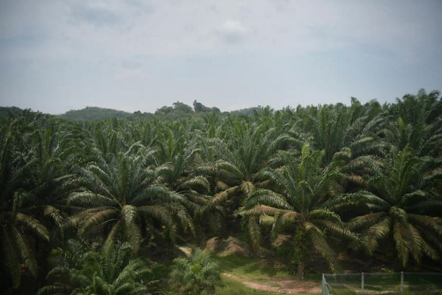 Malaysia, the second-largest palm oil producer after Indonesia, has been increasingly vocal against criticism from Europe that the cultivation of the crop has resulted in deforestation and wildlife habitat destruction.