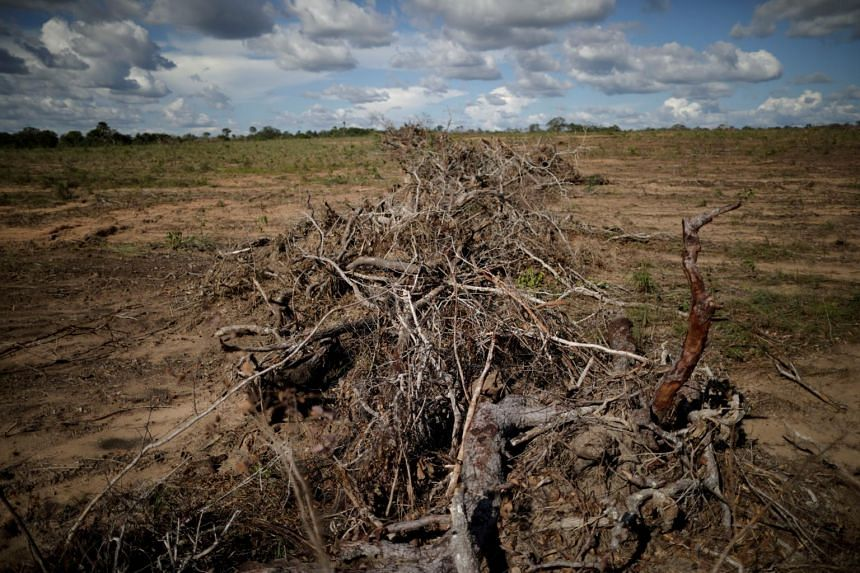 According to data from Brazil's space research agency, deforestation in the world's largest tropical rainforest totalled 920 square km (about 1.3 times the size of Singapore).