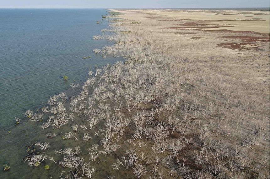 Mangroves dying across a 1,000km length of coast in northern Australia in 2016. Experts believe a combination of extreme temperatures, drought and sea level changes was responsible, and likened the mangrove death to the large-scale bleaching of coral